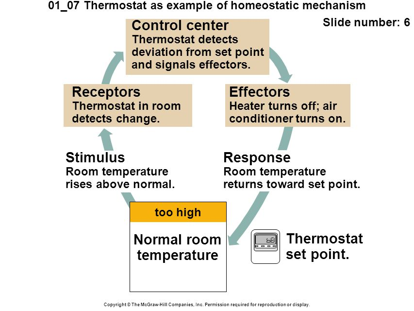 01_07 Thermostat as example of homeostatic mechanism Slide number: 7 Copyright © The McGraw-Hill Companies, Inc.