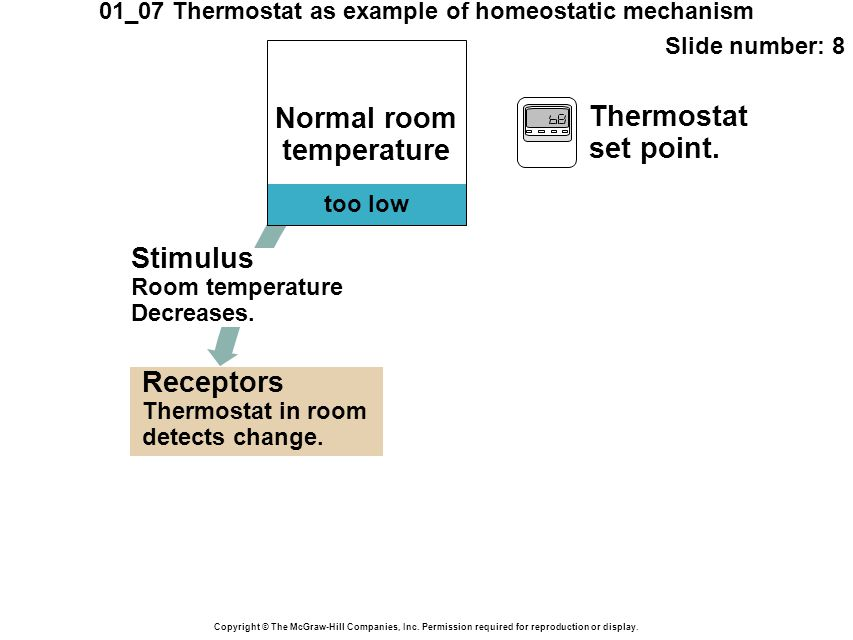 01_07 Thermostat as example of homeostatic mechanism Slide number: 9 Copyright © The McGraw-Hill Companies, Inc.