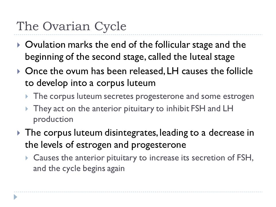 The Ovarian Cycle  Ovulation marks the end of the follicular stage and the beginning of the second stage, called the luteal stage  Once the ovum has