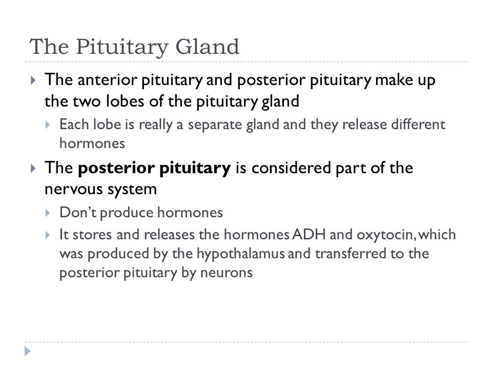 The Pituitary Gland  The anterior pituitary and posterior pituitary make up the two lobes of the pituitary gland  Each lobe is really a separate gla