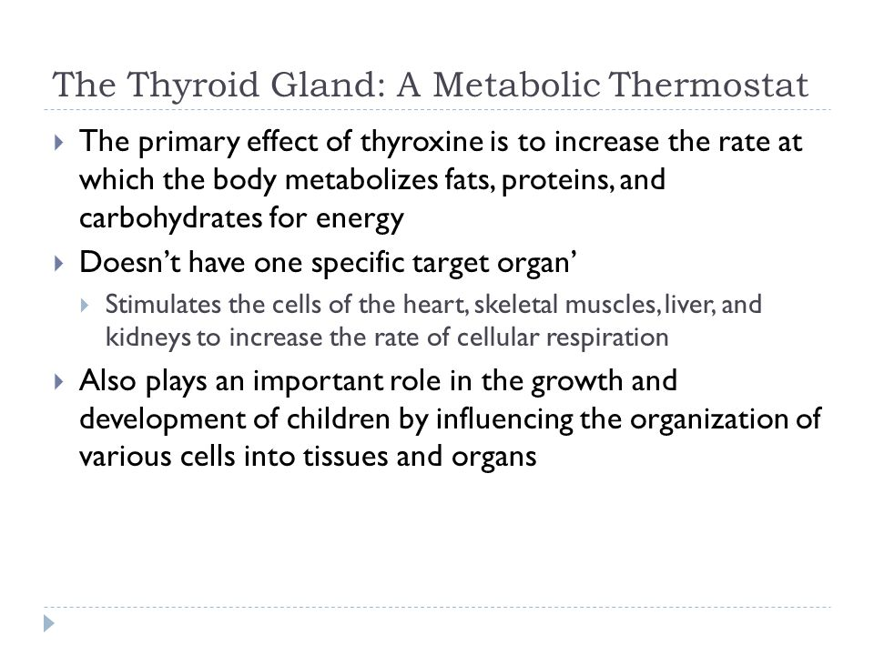 The Thyroid Gland: A Metabolic Thermostat  The primary effect of thyroxine is to increase the rate at which the body metabolizes fats, proteins, and