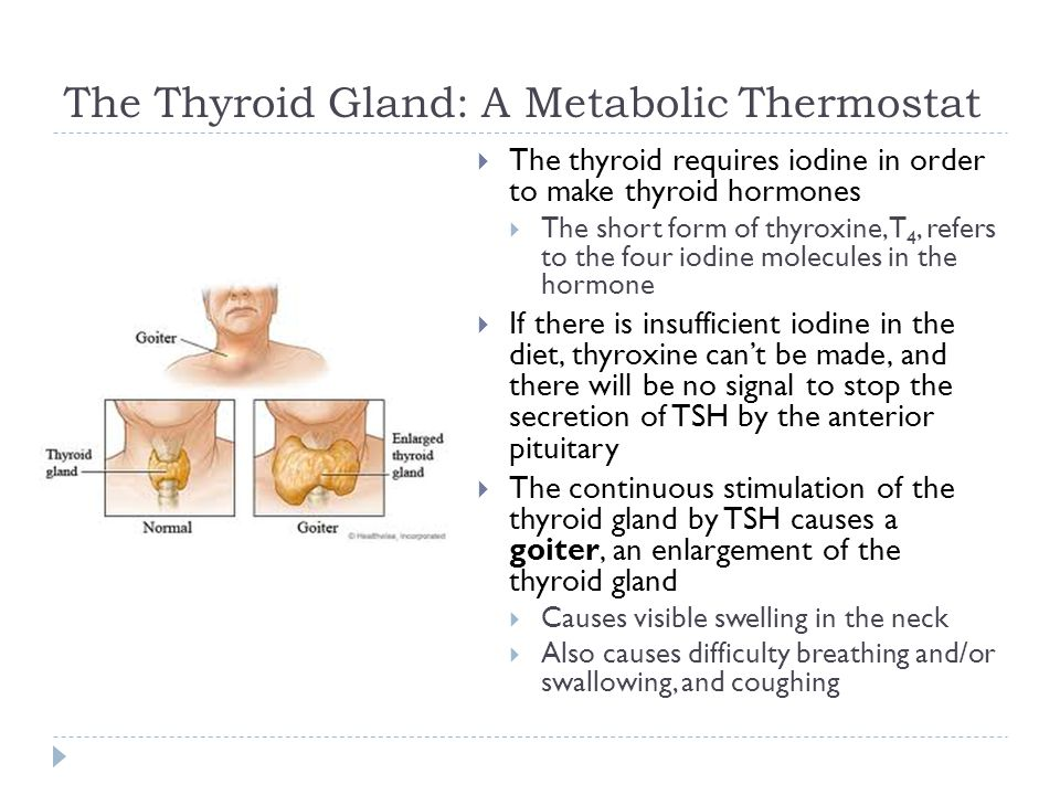 The Thyroid Gland: A Metabolic Thermostat  The thyroid requires iodine in order to make thyroid hormones  The short form of thyroxine, T 4, refers t
