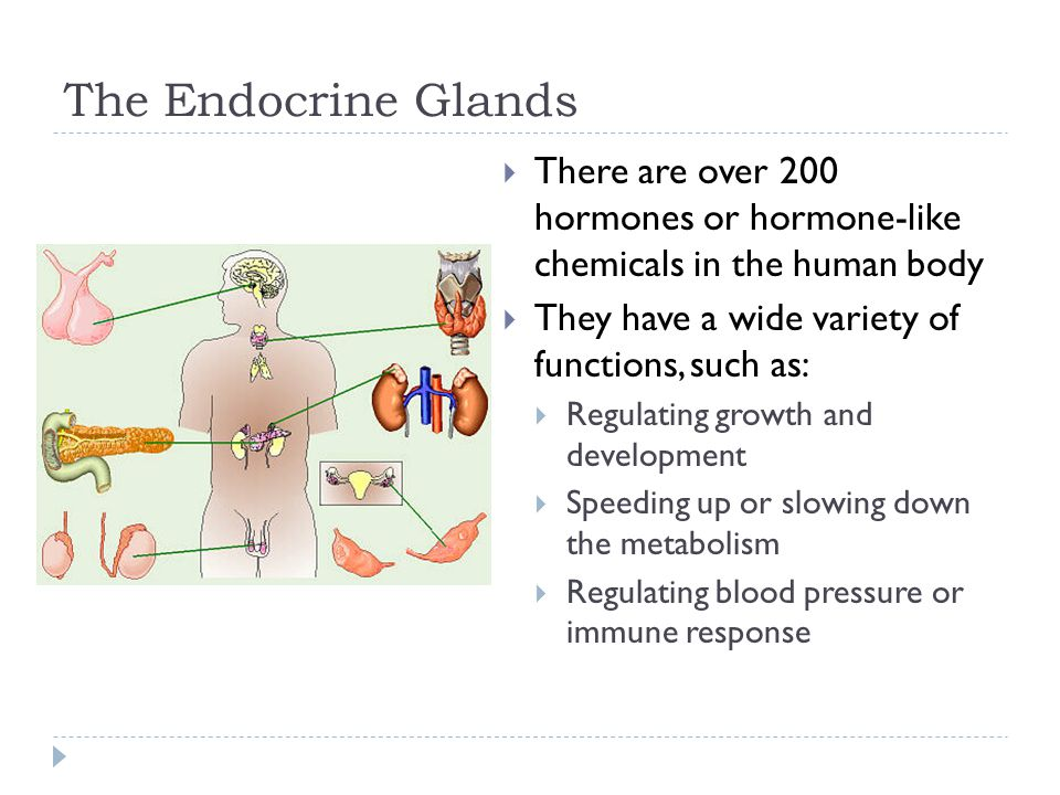 The Endocrine Glands  There are over 200 hormones or hormone-like chemicals in the human body  They have a wide variety of functions, such as:  Reg