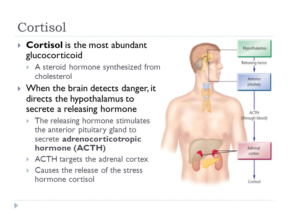 Cortisol  Cortisol is the most abundant glucocorticoid  A steroid hormone synthesized from cholesterol  When the brain detects danger, it directs t