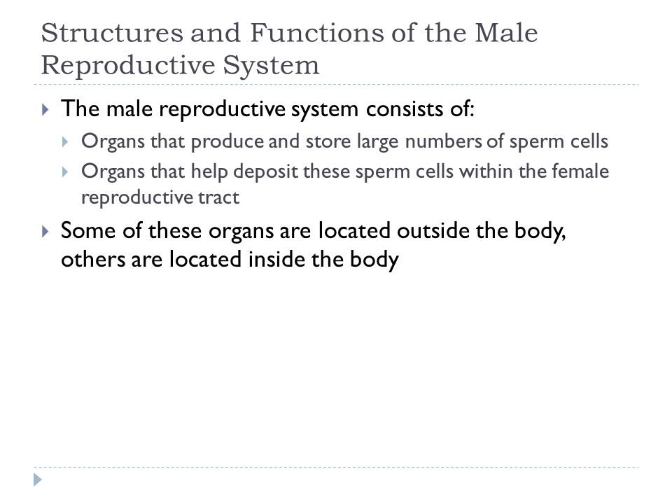 Structures and Functions of the Male Reproductive System  The male reproductive system consists of:  Organs that produce and store large numbers of