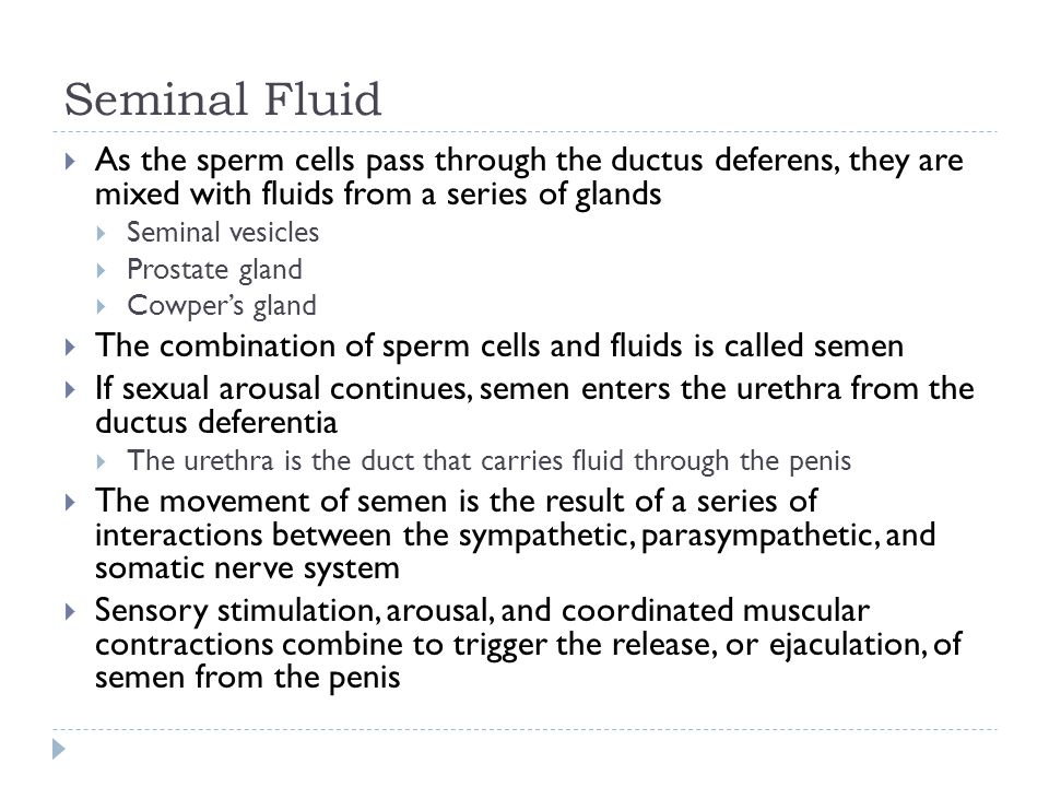 Seminal Fluid  As the sperm cells pass through the ductus deferens, they are mixed with fluids from a series of glands  Seminal vesicles  Prostate