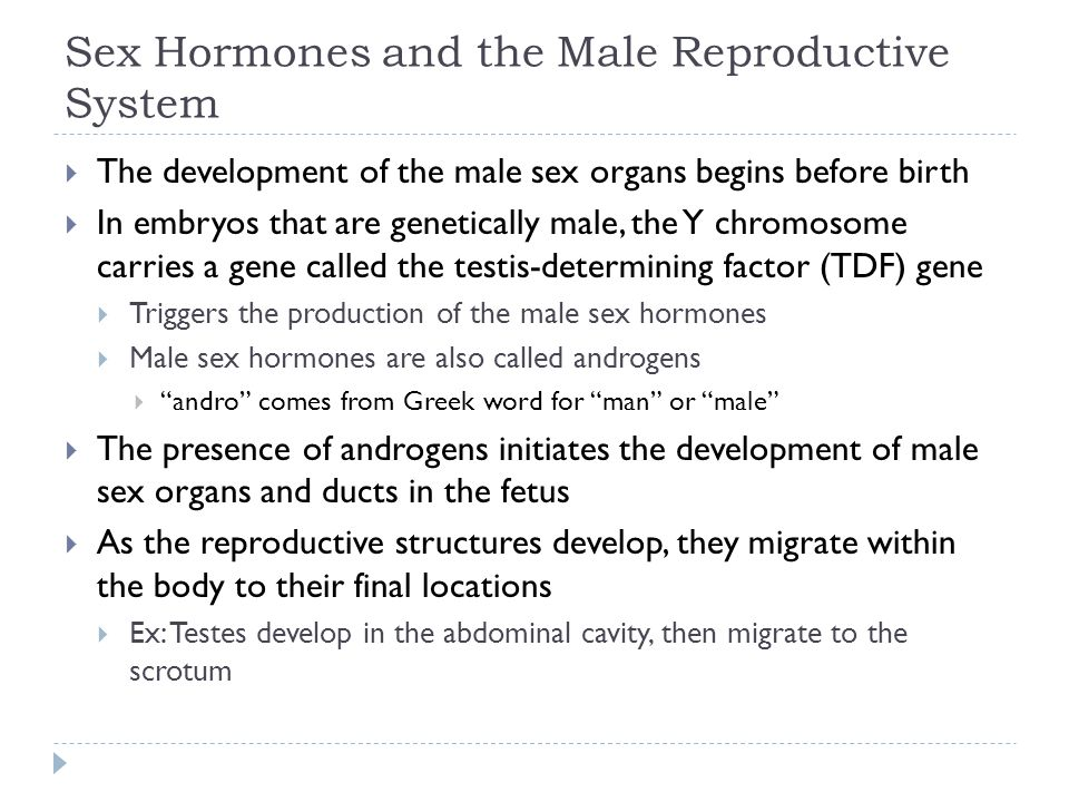 Sex Hormones and the Male Reproductive System  The development of the male sex organs begins before birth  In embryos that are genetically male, the