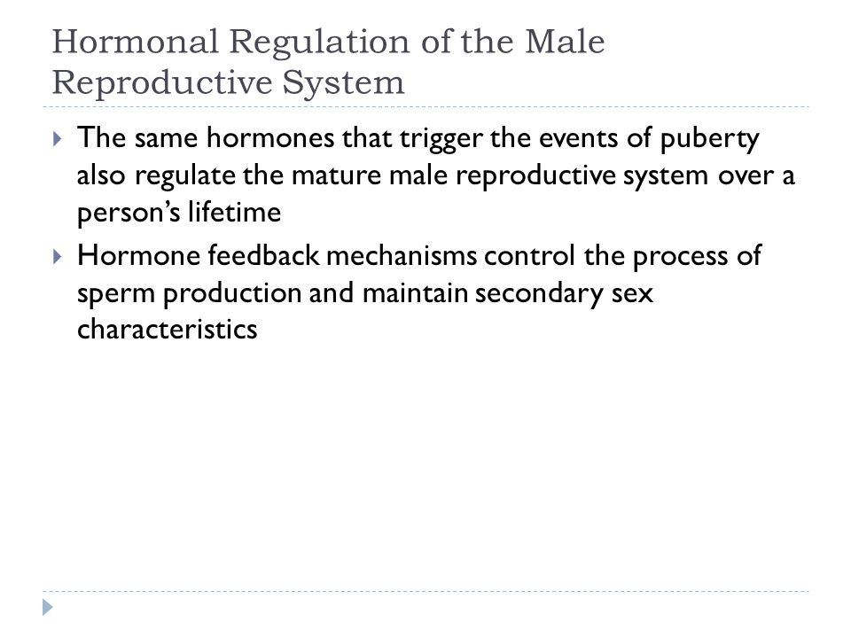 Hormonal Regulation of the Male Reproductive System  The same hormones that trigger the events of puberty also regulate the mature male reproductive
