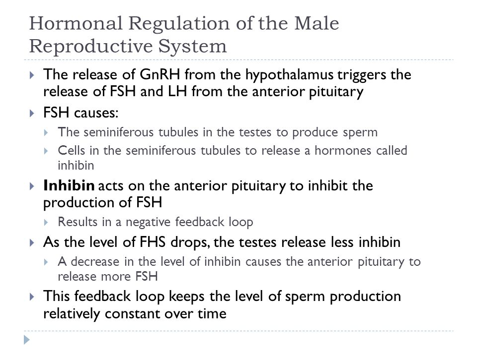  The release of GnRH from the hypothalamus triggers the release of FSH and LH from the anterior pituitary  FSH causes:  The seminiferous tubules in