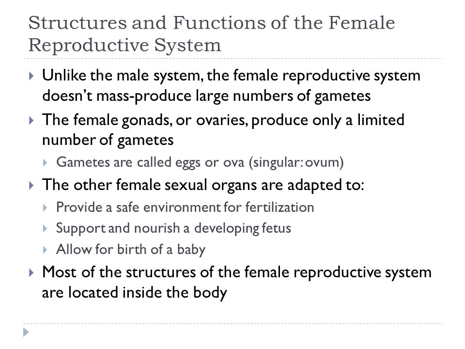 Structures and Functions of the Female Reproductive System  Unlike the male system, the female reproductive system doesn't mass-produce large numbers