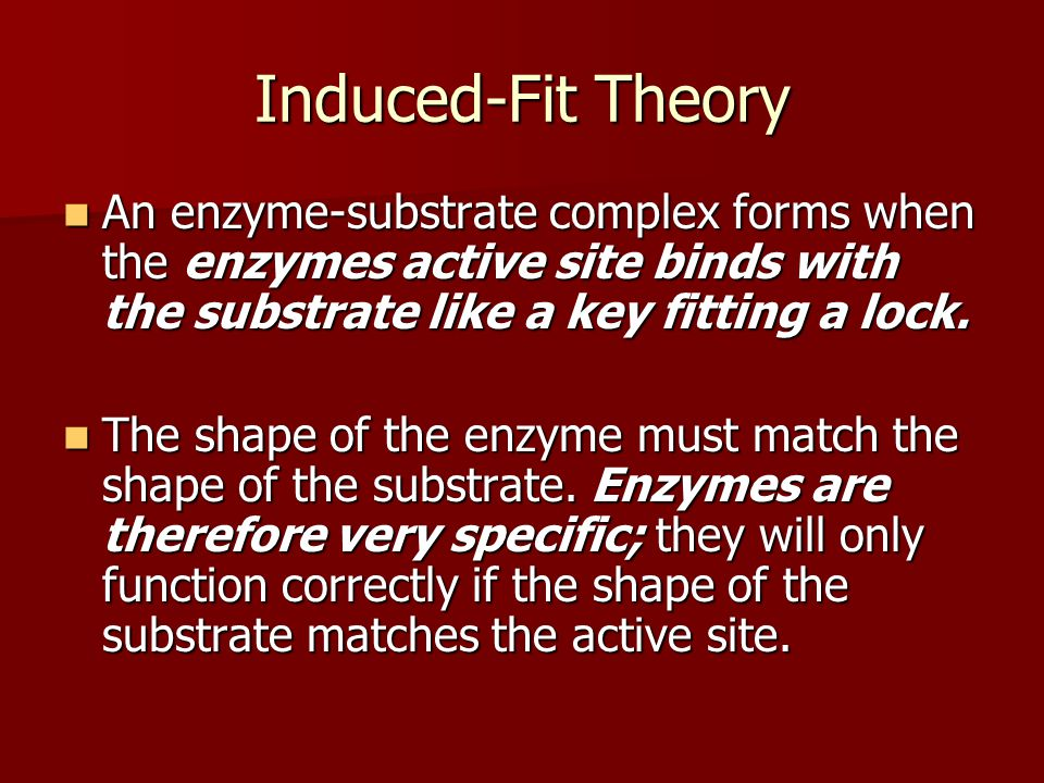 Induced-Fit Theory An enzyme-substrate complex forms when the enzymes active site binds with the substrate like a key fitting a lock.