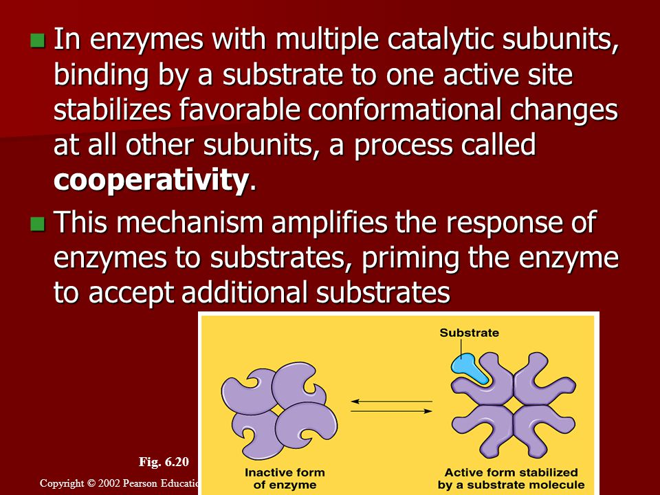 In enzymes with multiple catalytic subunits, binding by a substrate to one active site stabilizes favorable conformational changes at all other subunits, a process called cooperativity.