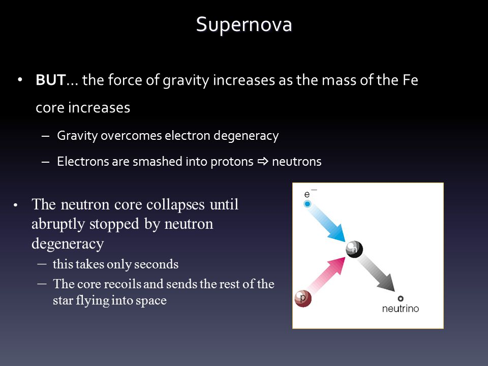 Supernova BUT… the force of gravity increases as the mass of the Fe core increases – Gravity overcomes electron degeneracy – Electrons are smashed int