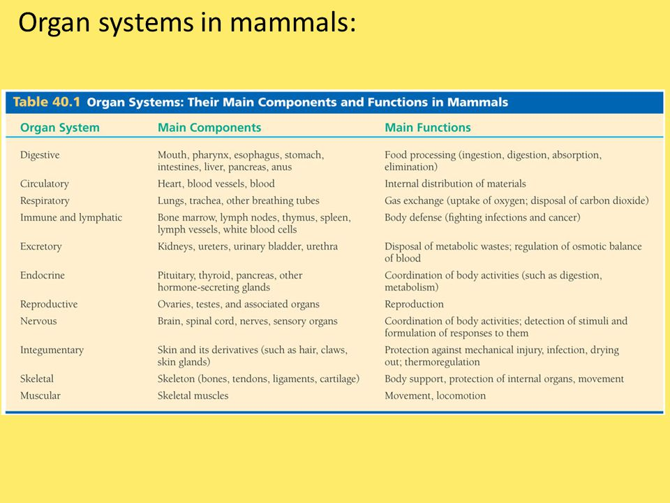 Organ systems in mammals: