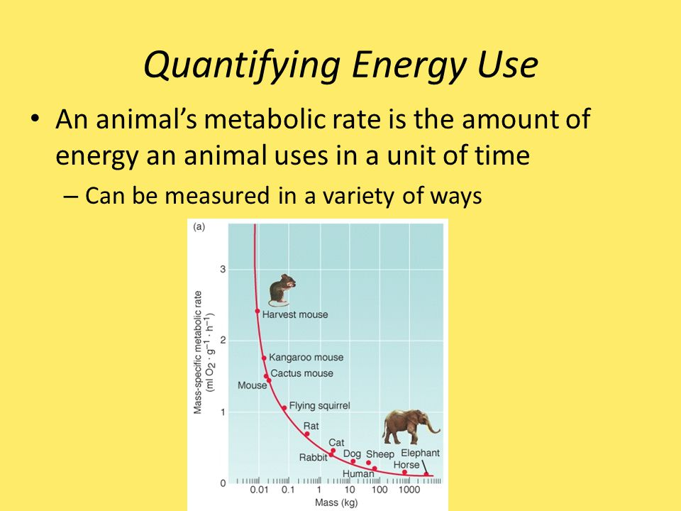 Quantifying Energy Use An animal's metabolic rate is the amount of energy an animal uses in a unit of time – Can be measured in a variety of ways