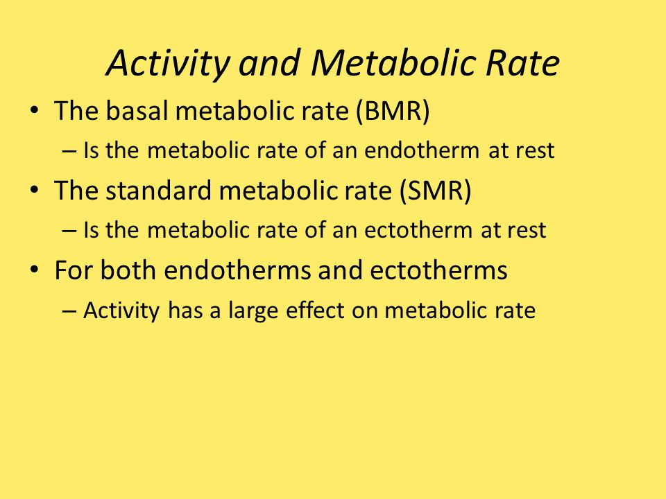 Activity and Metabolic Rate The basal metabolic rate (BMR) – Is the metabolic rate of an endotherm at rest The standard metabolic rate (SMR) – Is the metabolic rate of an ectotherm at rest For both endotherms and ectotherms – Activity has a large effect on metabolic rate