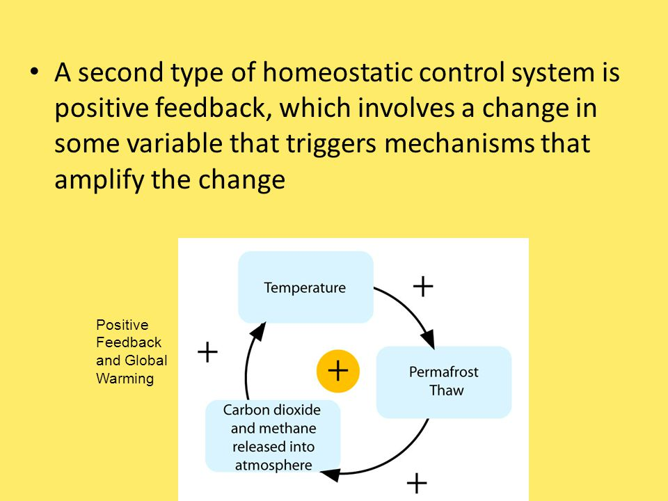 A second type of homeostatic control system is positive feedback, which involves a change in some variable that triggers mechanisms that amplify the change Positive Feedback and Global Warming