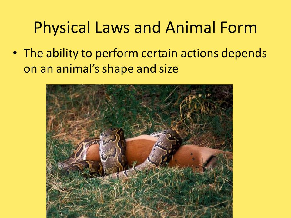 Physical Laws and Animal Form The ability to perform certain actions depends on an animal's shape and size