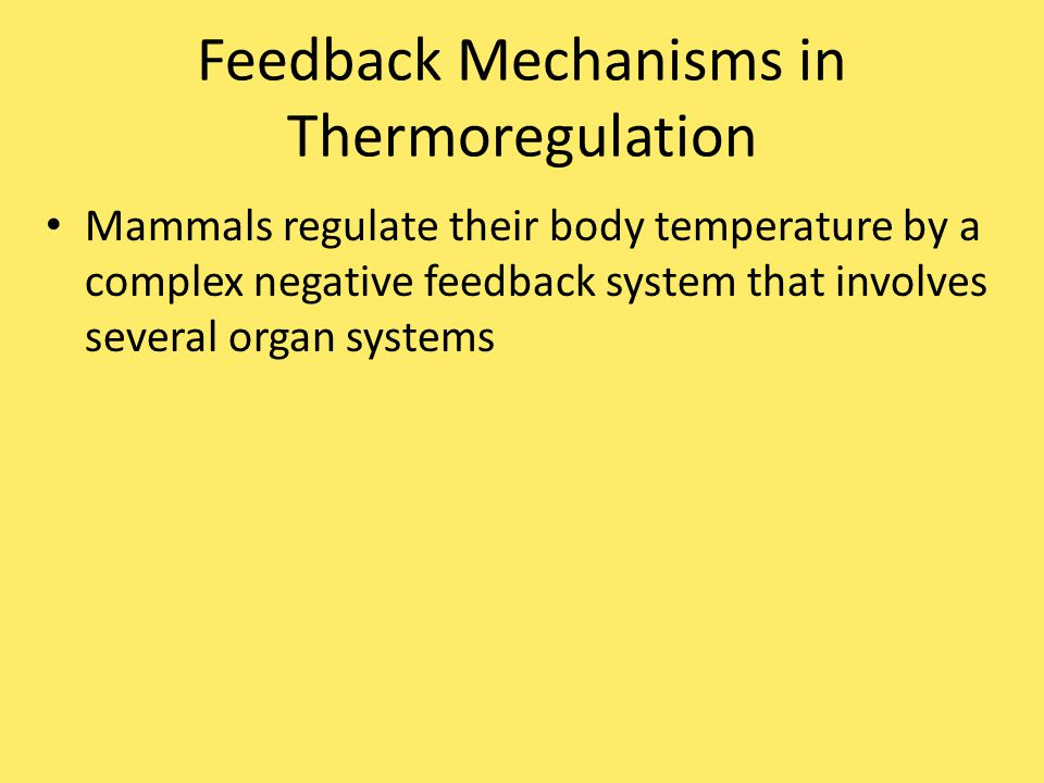 Feedback Mechanisms in Thermoregulation Mammals regulate their body temperature by a complex negative feedback system that involves several organ systems