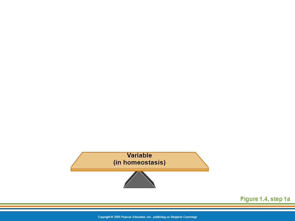 Copyright © 2009 Pearson Education, Inc., publishing as Benjamin Cummings Figure 1.4, step 1a Variable (in homeostasis)