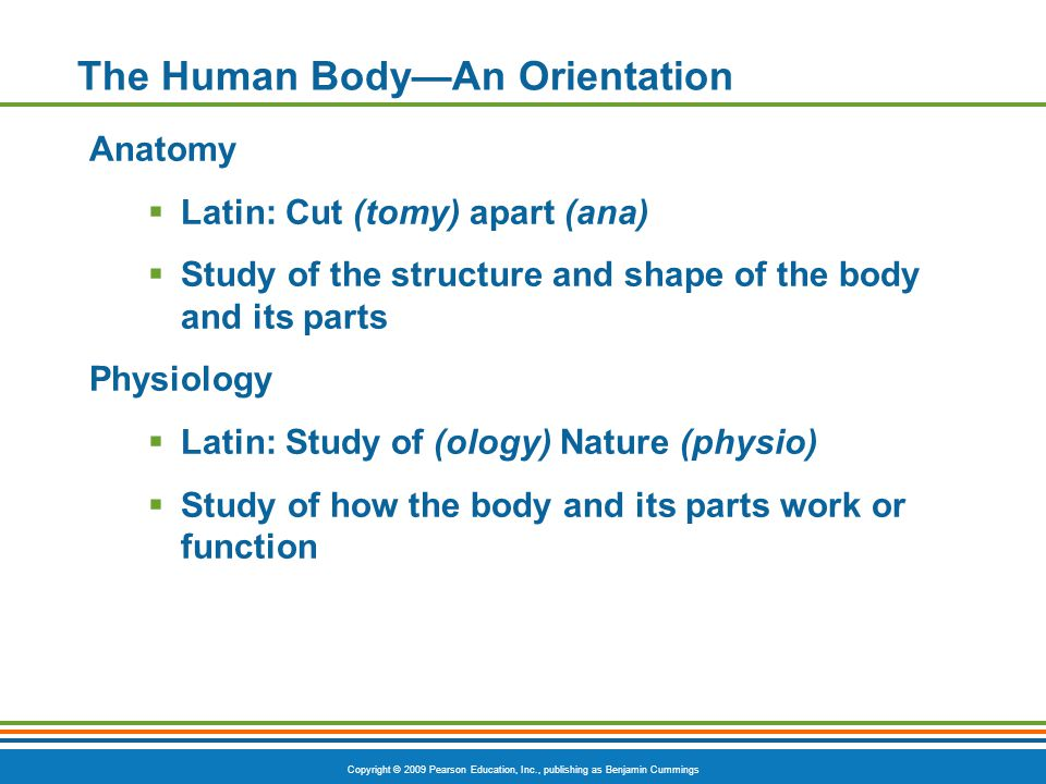 Copyright © 2009 Pearson Education, Inc., publishing as Benjamin Cummings Body Cavities  Dorsal body cavity  Cranial cavity houses the brain  Spinal cavity houses the spinal cord  Ventral body cavity  Thoracic cavity houses heart, lungs and others  Abdominopelvic cavity houses digestive system and most urinary system organs
