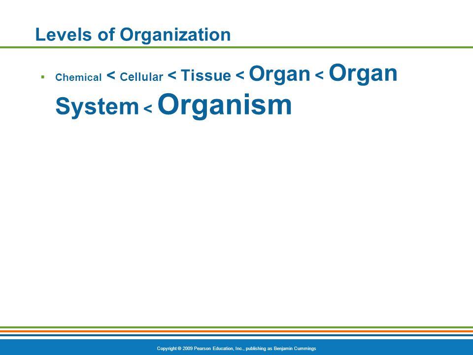 Copyright © 2009 Pearson Education, Inc., publishing as Benjamin Cummings Abdominopelvic Major Organs Figure 1.8c
