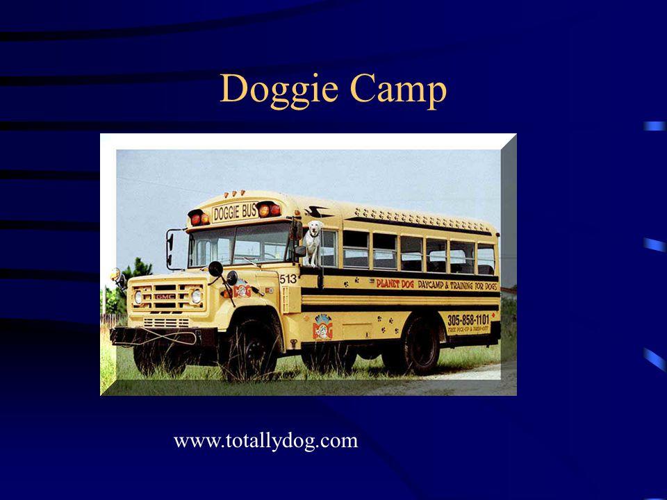 Doggie Camp www.totallydog.com