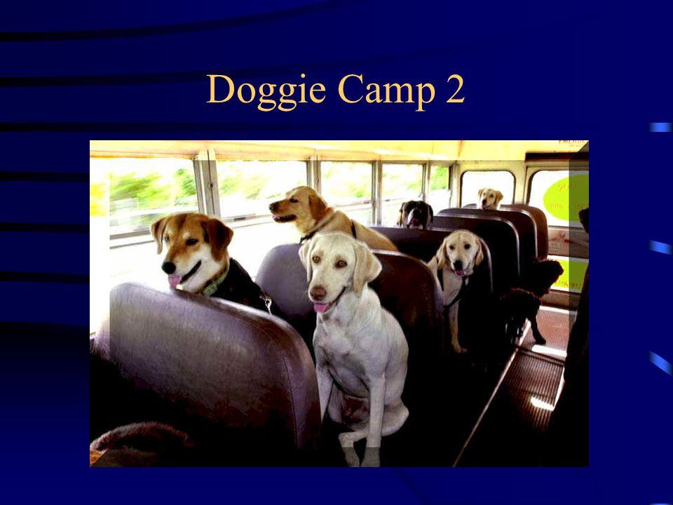 Doggie Camp 2
