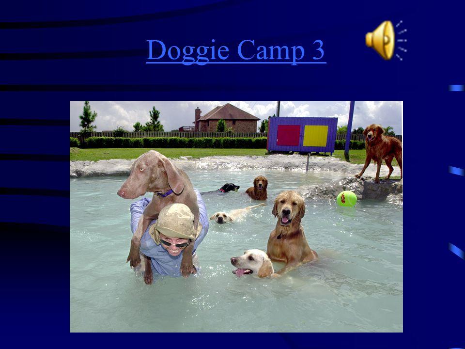 Doggie Camp 3