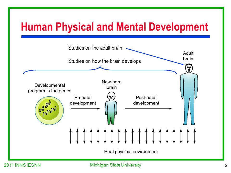 2011 INNS IESNN 2 Michigan State University Human Physical and Mental Development Studies on the adult brain Studies on how the brain develops