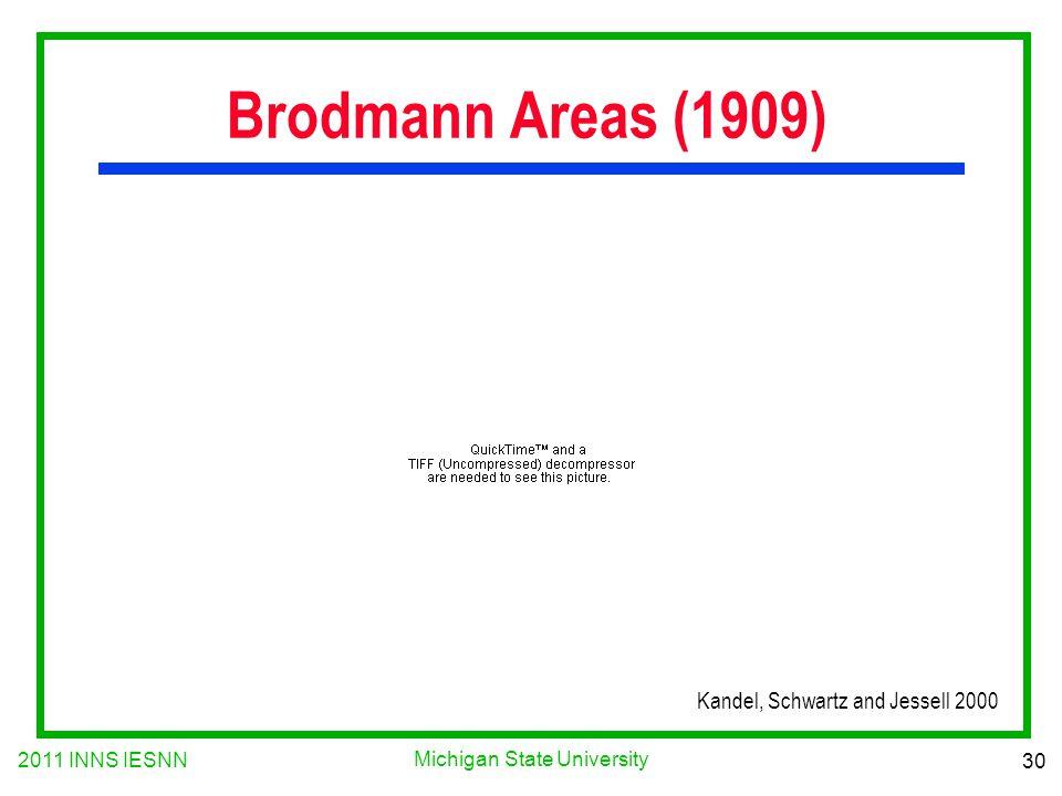 2011 INNS IESNN 30 Michigan State University Brodmann Areas (1909) Kandel, Schwartz and Jessell 2000