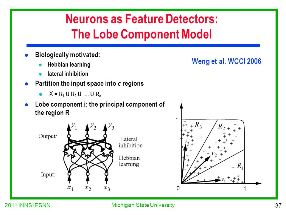 2011 INNS IESNN 37 Michigan State University Neurons as Feature Detectors: The Lobe Component Model l Biologically motivated: l Hebbian learning l lat