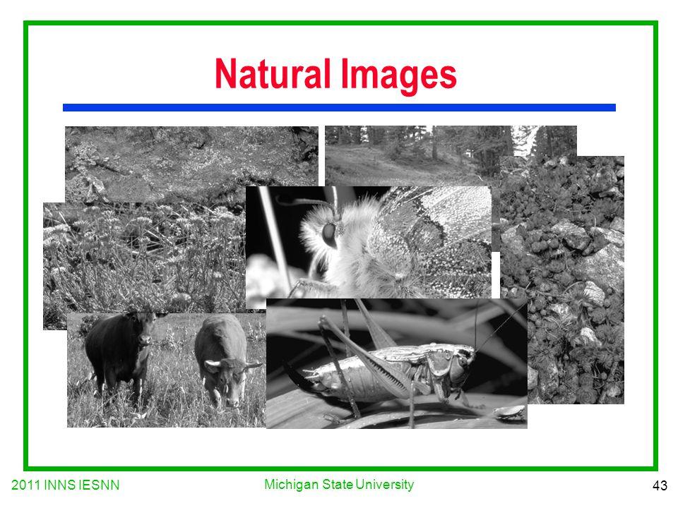 2011 INNS IESNN 43 Michigan State University Natural Images