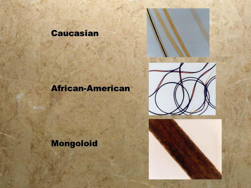 Caucasian African-American Mongoloid Caucasian African-American Mongoloid