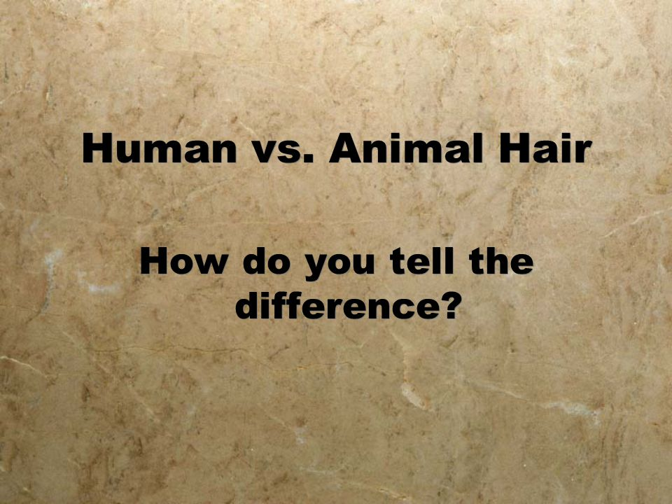 Human vs. Animal Hair How do you tell the difference?