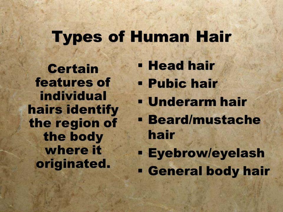 Types of Human Hair  Head hair  Pubic hair  Underarm hair  Beard/mustache hair  Eyebrow/eyelash  General body hair  Head hair  Pubic hair  Un