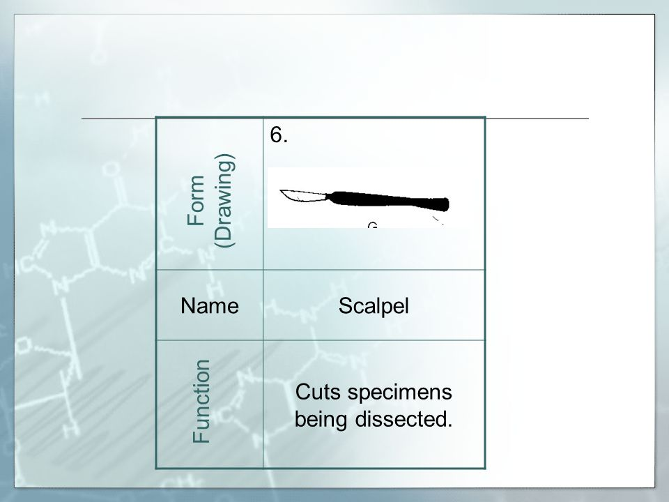 6. NameScalpel Cuts specimens being dissected. Form (Drawing) Function