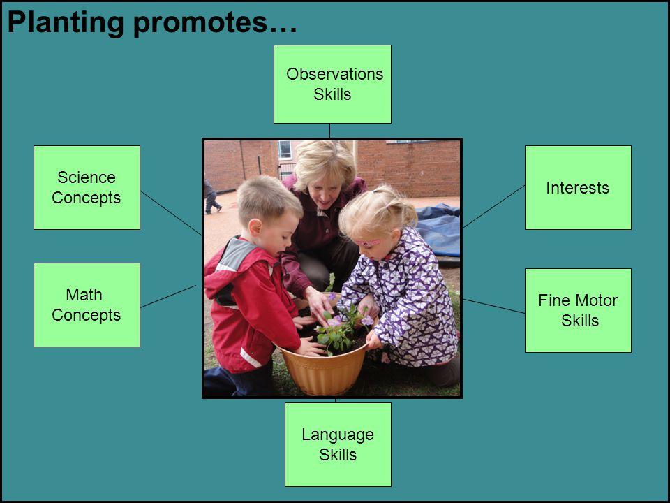 Planting promotes… Observations Skills Interests Fine Motor Skills Math Concepts Science Concepts Language Skills