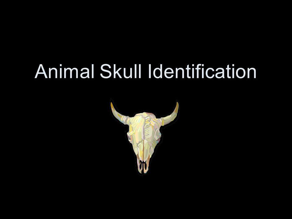 Identify the Following Mystery Animal Skulls!