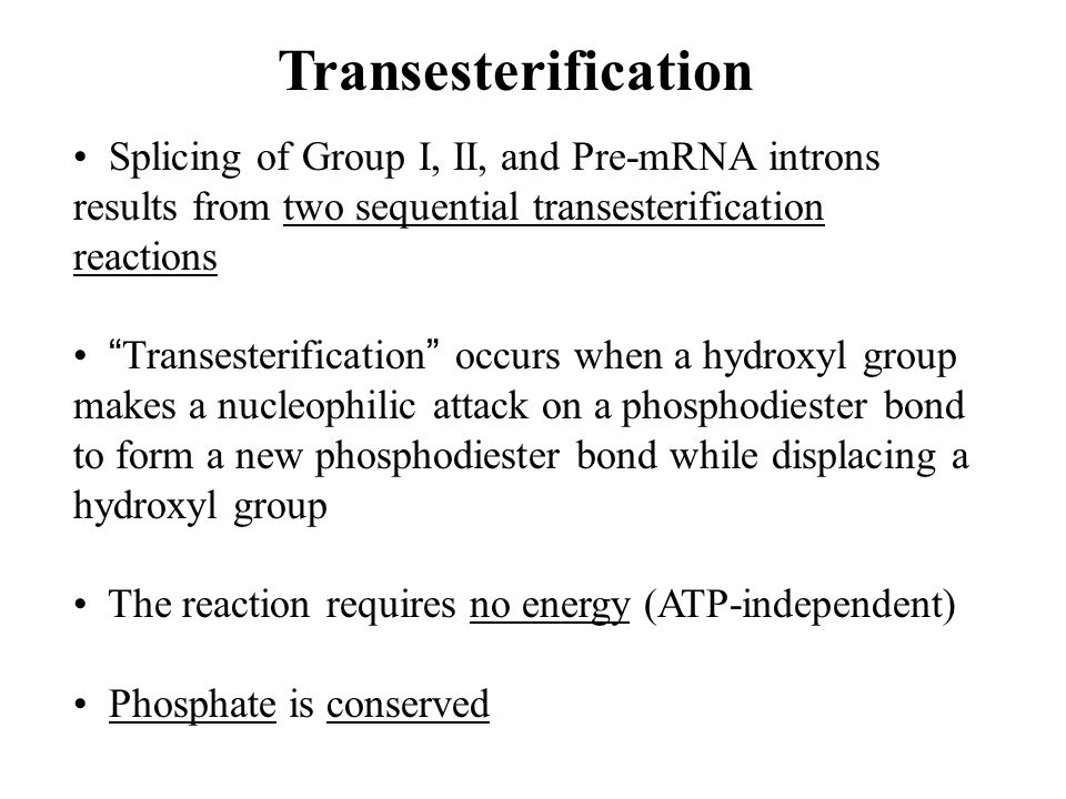 """Splicing of Group I, II, and Pre-mRNA introns results from two sequential transesterification reactions """" Transesterification """" occurs when a hydroxyl"""
