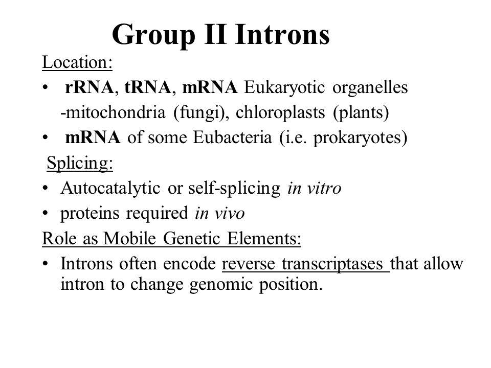 Group II Introns Location: rRNA, tRNA, mRNA Eukaryotic organelles -mitochondria (fungi), chloroplasts (plants) mRNA of some Eubacteria (i.e. prokaryot