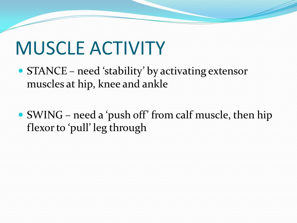 MUSCLE ACTIVITY STANCE – need 'stability' by activating extensor muscles at hip, knee and ankle SWING – need a 'push off' from calf muscle, then hip flexor to 'pull' leg through