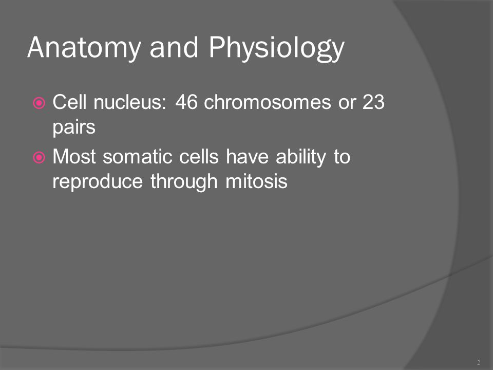 Anatomy and Physiology  Cell nucleus: 46 chromosomes or 23 pairs  Most somatic cells have ability to reproduce through mitosis 2