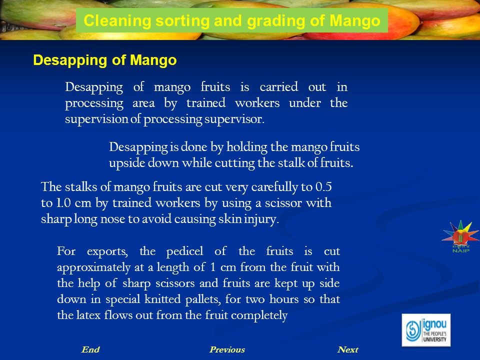 Desapping of Mango Desapping of mango fruits is carried out in processing area by trained workers under the supervision of processing supervisor. Desa
