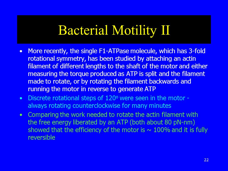 22 Bacterial Motility II More recently, the single F1-ATPase molecule, which has 3-fold rotational symmetry, has been studied by attaching an actin filament of different lengths to the shaft of the motor and either measuring the torque produced as ATP is split and the filament made to rotate, or by rotating the filament backwards and running the motor in reverse to generate ATP Discrete rotational steps of 120 o were seen in the motor - always rotating counterclockwise for many minutes Comparing the work needed to rotate the actin filament with the free energy liberated by an ATP (both about 80 pN-nm) showed that the efficiency of the motor is ~ 100% and it is fully reversible