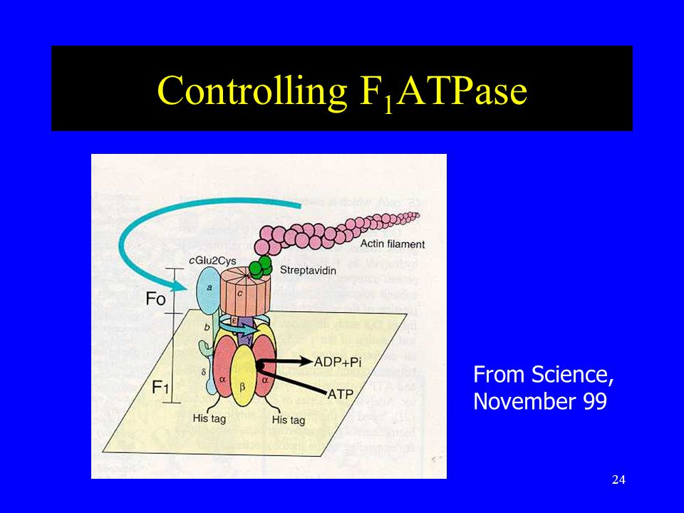 24 Controlling F 1 ATPase From Science, November 99