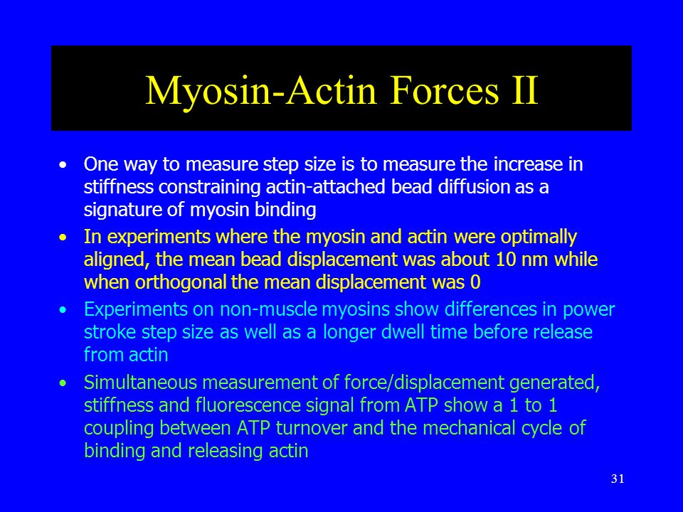 31 Myosin-Actin Forces II One way to measure step size is to measure the increase in stiffness constraining actin-attached bead diffusion as a signature of myosin binding In experiments where the myosin and actin were optimally aligned, the mean bead displacement was about 10 nm while when orthogonal the mean displacement was 0 Experiments on non-muscle myosins show differences in power stroke step size as well as a longer dwell time before release from actin Simultaneous measurement of force/displacement generated, stiffness and fluorescence signal from ATP show a 1 to 1 coupling between ATP turnover and the mechanical cycle of binding and releasing actin