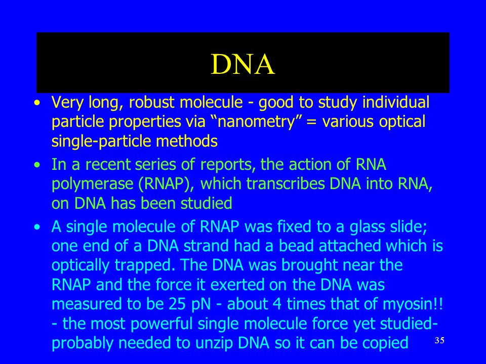 35 DNA Very long, robust molecule - good to study individual particle properties via nanometry = various optical single-particle methods In a recent series of reports, the action of RNA polymerase (RNAP), which transcribes DNA into RNA, on DNA has been studied A single molecule of RNAP was fixed to a glass slide; one end of a DNA strand had a bead attached which is optically trapped.