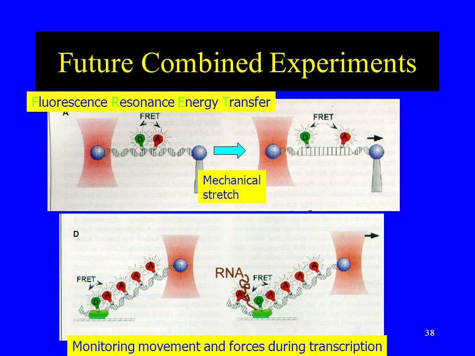 38 Future Combined Experiments Fluorescence Resonance Energy Transfer Mechanical stretch Monitoring movement and forces during transcription