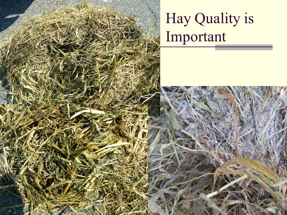 Hay Quality is Important